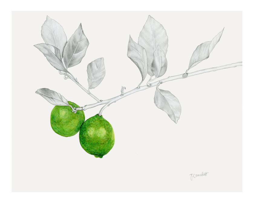 LimeBranch_web_lowres