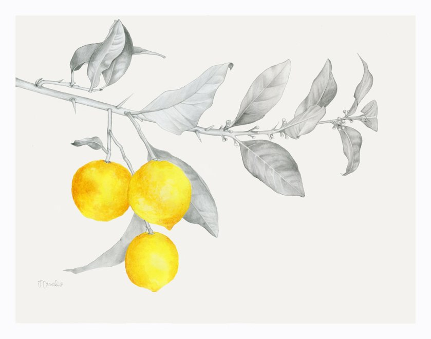 LemonBranch_web_lowres